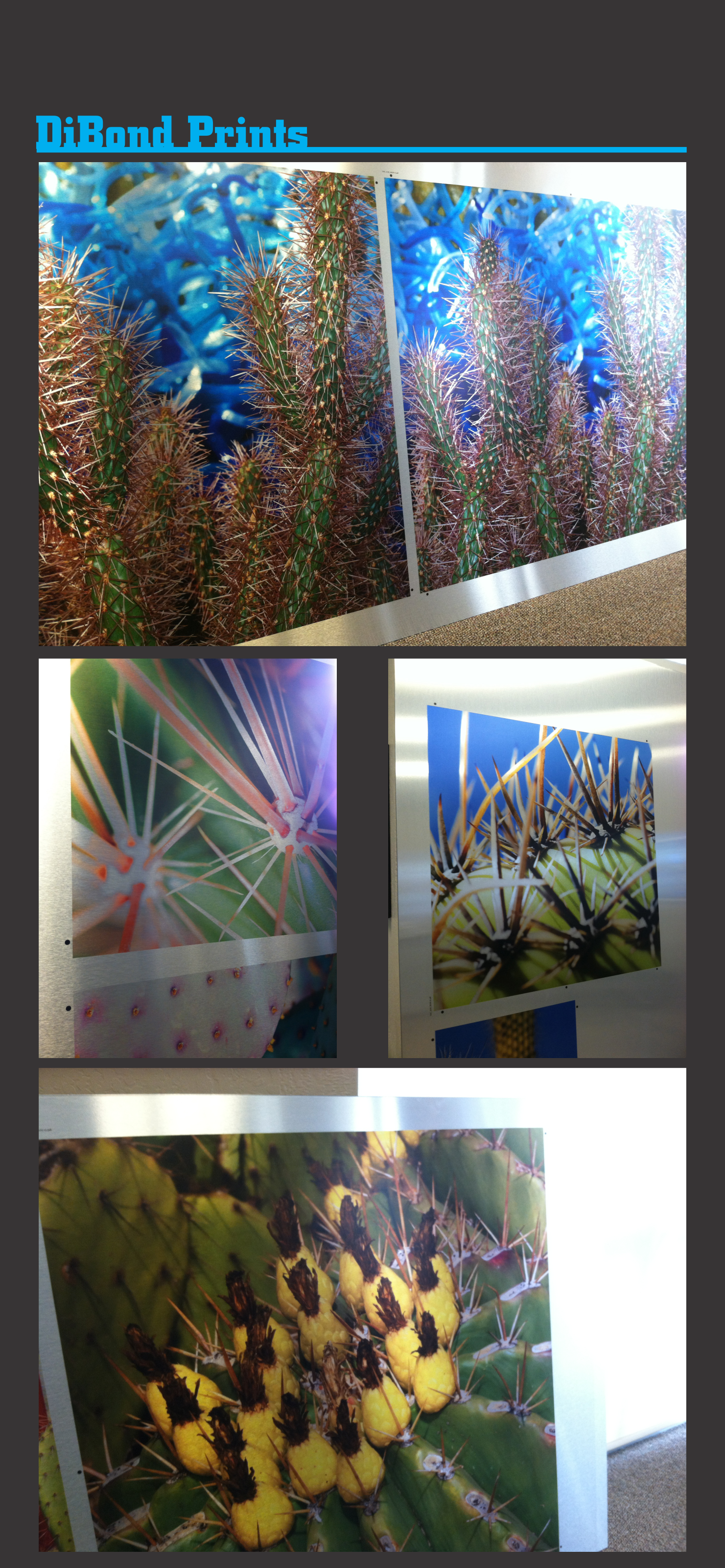 Examples of colorful Dibond prints