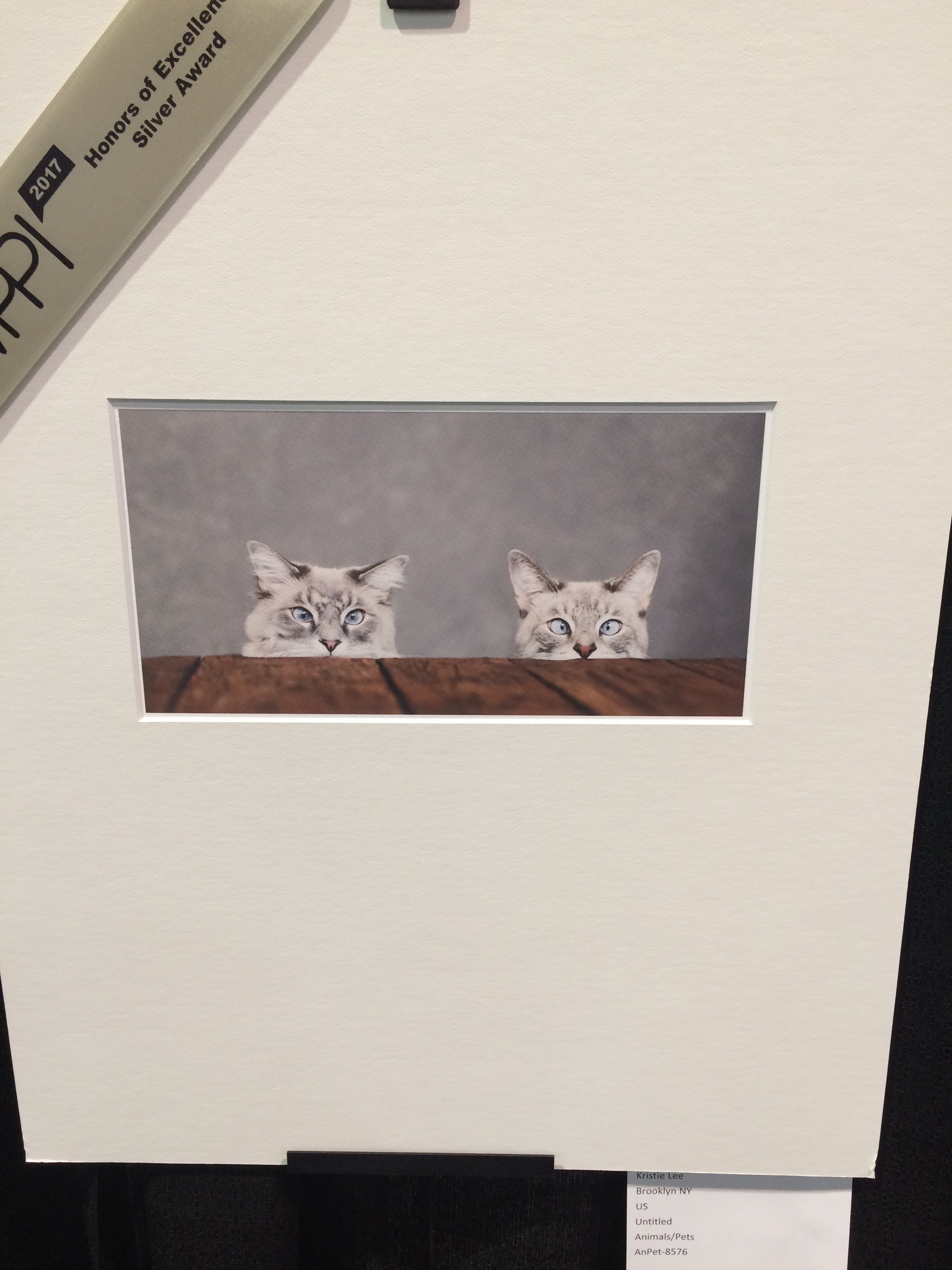 It's not all wedding and portrait photography at the Expo - there were even cat prints!
