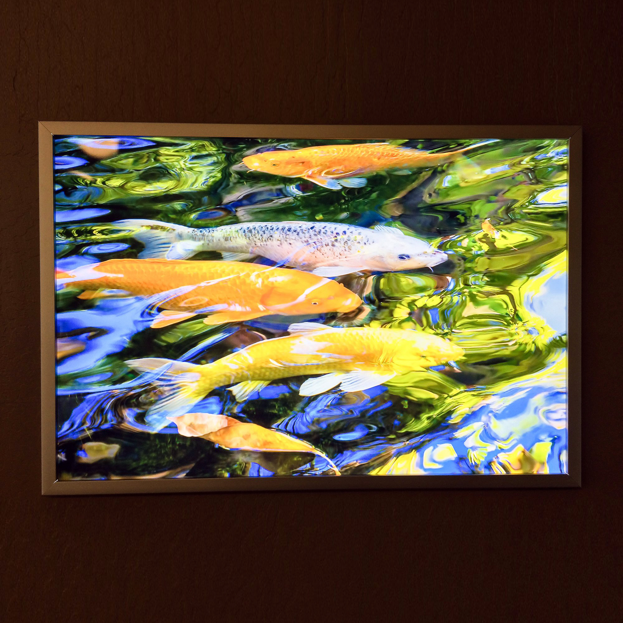 ArtisanHD Duratrans Light Box Backlit Prints Koi Fish