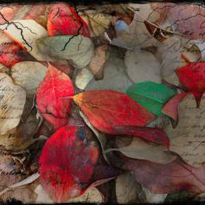 spectacular digital art prints by Light Seeker: Autumn glory