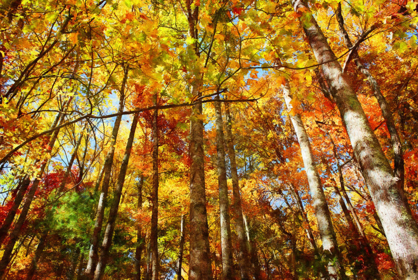 Colors of Autumn digital art prints by Rebecah Thompson