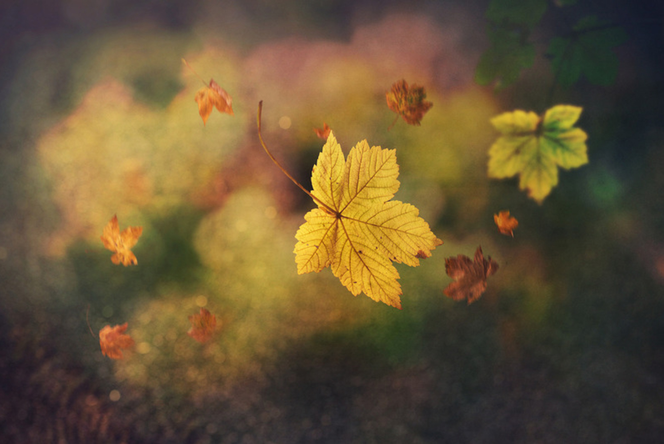 Digital art prints for Fall by Edwin Leung