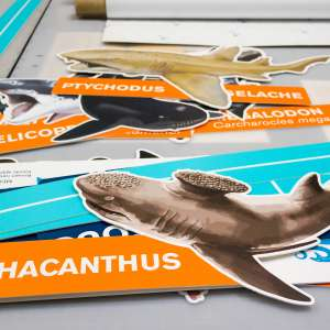 custom event signage sharks