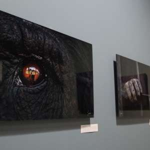 best acrylic prints eye