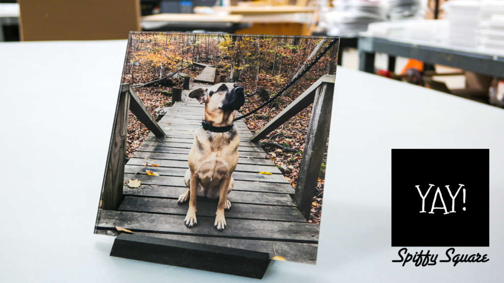 spiffysquare dog print in shop artisanhd
